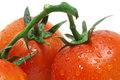 Tomatoes With Water Droplets Royalty Free Stock Photos - 3800318