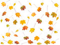 Autumn Leafs Royalty Free Stock Photography - 3801147