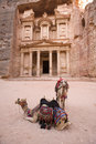 Two Camels In Front Of Treasury At Petra Jordan Royalty Free Stock Photos - 3806628