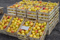 Fresh Organic Rows Of Apples Crates At The Farmers Market Stock Images - 38015394