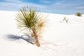 White Sands National Monument Royalty Free Stock Images - 38032819
