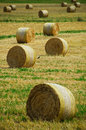 Hay Bales And A Crow Royalty Free Stock Photo - 3813845