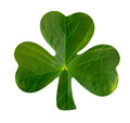 Emblematic Shamrock Stock Photo - 38102740