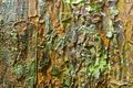 Natural Camouflage Stock Photo - 38107430