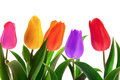 Isolated Spring Tulips Royalty Free Stock Photo - 38125225