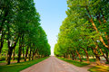 Green Alley In Summer Park Royalty Free Stock Images - 38128819