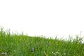 Grass Isolated Royalty Free Stock Photography - 38156087