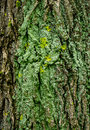Lichen Bark Texture Stock Photo - 38158430