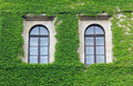 Facade Overgrown With Ivy Leaves, Two Arched Windows Stock Image - 38168291