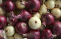 Onions Royalty Free Stock Image - 38189746