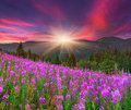 Beautiful Summer Landscape In The Mountains Royalty Free Stock Photography - 38222887