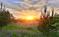 Sunset Over Meadow Royalty Free Stock Image - 38235916