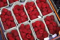 Boxes Of Red Raspberries Stock Image - 3833871
