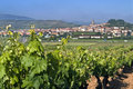 Village View With Vineyard In Rural Landscape Stock Images - 38306894