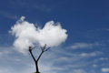 Cloud Tree Stock Photography - 38337752