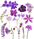 Set Of Lilac Color Flowers On White Stock Photo - 38341610