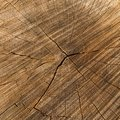 Cross Section Of The Oak Trunk Royalty Free Stock Image - 38351376