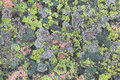 Lichen Textures Stock Images - 38394694