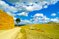 Tuscany, Lonely Tree And Rural Road. Siena, Orcia Valley, Italy. Royalty Free Stock Image - 38402126