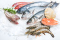 Seafood On Ice Royalty Free Stock Photo - 38406165