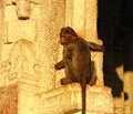 Monkey On The Wall Of A Temple Stock Photography - 38427082