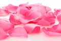 Pink Rose Petals On White Royalty Free Stock Photo - 38457645