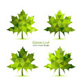 Green Mosaic Vector Maple Leaf Royalty Free Stock Photos - 38483998