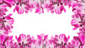 Frame With Cyclamen Flower Stock Images - 38492744