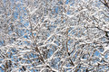 Winter Twigs Royalty Free Stock Photo - 3853955