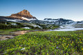 Reynolds Mountain Over Wildflower Field, Glacier National Park Stock Photography - 38500872