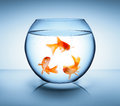 Goldfish In Recycle Concept Stock Photography - 38542162