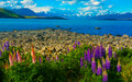 Lake Tekapo Royalty Free Stock Photos - 38560768
