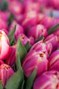 Background Of Colourful Vivid Summer Flowers Stock Images - 38571584