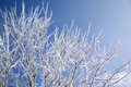 Tree With Ice Stock Photography - 3866702