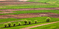 Polish Fields In The Spring Stock Images - 38611064