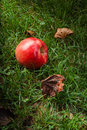 Red Apple Stock Photo - 38672300