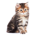 Little Kitten Stock Photo - 38674430