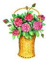 Basket With Red Roses Royalty Free Stock Photo - 38678995