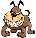 Angry Dog Stock Images - 38708974