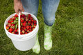 Woman Holding Pail Of Fresh Strawberries Stock Image - 38736591
