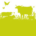 Cows On The Meadow Royalty Free Stock Photos - 38743778