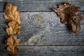 Dry Oak Leaves On Grey Boards Stock Photo - 38757280