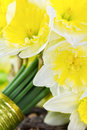 Bride S Narcissus Bouquet Side View Closeup Stock Image - 38763041
