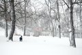 Forest Park In Heavy Snow Storm Stock Photography - 38794852