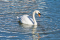 Swan Floating On The Water Royalty Free Stock Image - 38796166