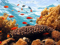 Coral Scene Royalty Free Stock Photo - 3887075