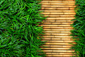 Green Grass On Bamboo Royalty Free Stock Photo - 38831805