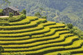 Rice Field In Ha Giang Stock Photos - 38835623