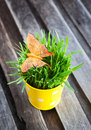Decorative Orange Butterfly On Fresh Green Grass Stock Images - 38863614