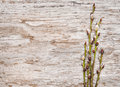 Easter Decoration With Catkins On Old Wood Royalty Free Stock Images - 38866149